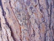 Sörja trädskället Royaltyfri Bild