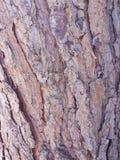 Sörja trädskället Royaltyfri Fotografi