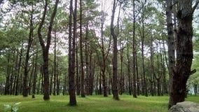 Sörja trädskogen royaltyfri fotografi
