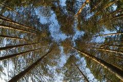 Sörja trädskogen Royaltyfria Foton