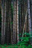 Sörja trädskogen Fotografering för Bildbyråer