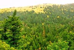 Sörja trädskogen av monteringen Taygetus Arkivfoton