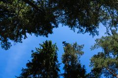 Sörja trädskogen i Augusti in i Lettland, övre sikt för botten arkivbild