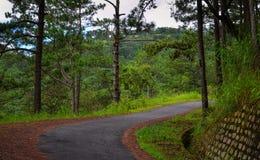 Sörja trädskogen i Dalat, Vietnam Arkivbilder