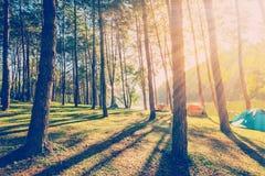 Sörja trädskogen med solljus och skuggor på soluppgång Arkivbild
