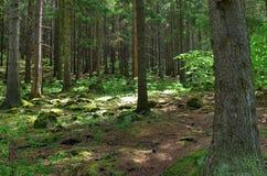 Sörja trädskoglandskapet Arkivfoton