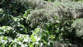 Sörja trädslaget i stark vind stock video