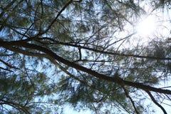 Sörja trädstranden och solen Arkivbild