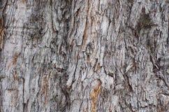 Sörja trädtextur, det knäckte trädet, gammal trädhud Arkivbild