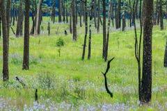 Sörja trädträdgården på den Phoosoidao nationalparken, Thailand Arkivfoton