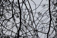 Sörja trädvisare med regndroppar och filialer fotografering för bildbyråer
