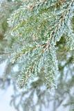 Sörja treen royaltyfria bilder