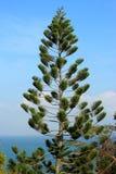 Sörja treen med blåttskyen Arkivbilder