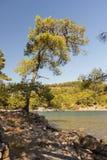 Sörja treen på havet Royaltyfri Fotografi