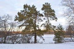 Sörja treen på kusten Arkivfoto