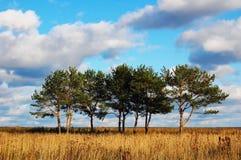 sörja trees Royaltyfri Bild