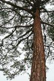 sörja treestammar Arkivfoto