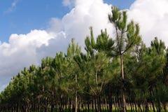 sörja unga trees Fotografering för Bildbyråer