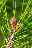 Sörjer barnet kotten, och lång gräsplan sörjer visare på en sörjafilial Närbild Arkivbild
