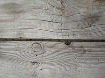 Sörjer den asp- akacian för trädeken den prydliga päronäpplekörsbäret arkivfoto
