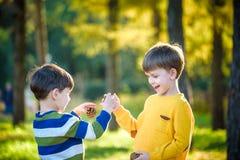 Sörjer den gulliga pysen för sibling som två spelar samman med stora två, kottar utomhus arkivfoton