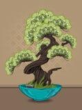 sörjer den vintergröna miniaturen för bonsai treen royaltyfri illustrationer