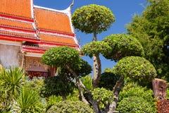 sörjer den vintergröna miniaturen för bonsai treen Royaltyfri Foto