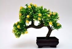 sörjer den vintergröna miniaturen för bonsai treen Royaltyfria Bilder