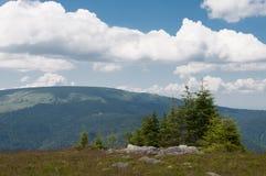 Sörjer dolda berg för skog och isolerat träd Royaltyfri Foto
