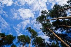 Sörjer och himmel Royaltyfri Foto