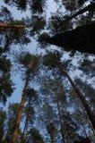 Sörjer på bakgrunden av himlen Fotografering för Bildbyråer