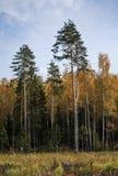 Sörjer på kanten av skogen fotografering för bildbyråer