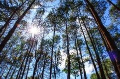 Sörjer skogen Arkivbild