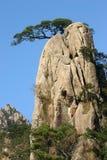 Sörjer trees på rockbildande Arkivfoto