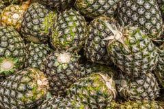 Söt ananas som planteras i trädgård Royaltyfria Foton