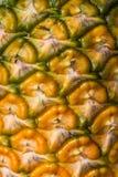 Söt ananas som planteras i trädgården Royaltyfria Foton