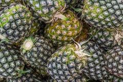 Söt ananasbuntträdgård Arkivbild