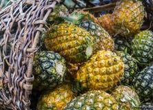 Söt ananasbuntträdgård Royaltyfria Bilder