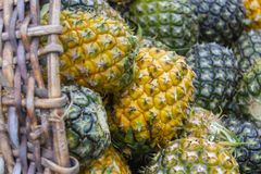Söt ananasbuntträdgård Royaltyfri Bild