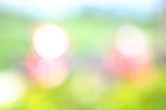 Söt bokeh blured bakgrund, fotografering för bildbyråer