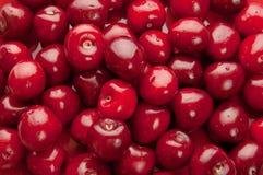 Söt Cherrybakgrund Royaltyfri Bild
