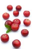 söt cranberry fotografering för bildbyråer