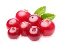 söt cranberry arkivbilder