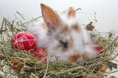 Söt easter kanin i hö och easter ägg Royaltyfria Bilder