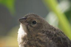 Söt fågelunge Arkivbild