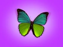 söt fjäril Arkivfoto