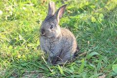 Söt fluffig kanin i grönt gräs Arkivbilder