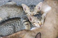 Söt grupp för ögonblick A av den olika kattungen som sover på golvet Fotografering för Bildbyråer