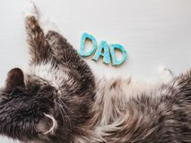 Söt gullig kattunge och ordet FARSA Arkivfoton