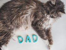 Söt gullig kattunge och ordet FARSA Royaltyfri Bild